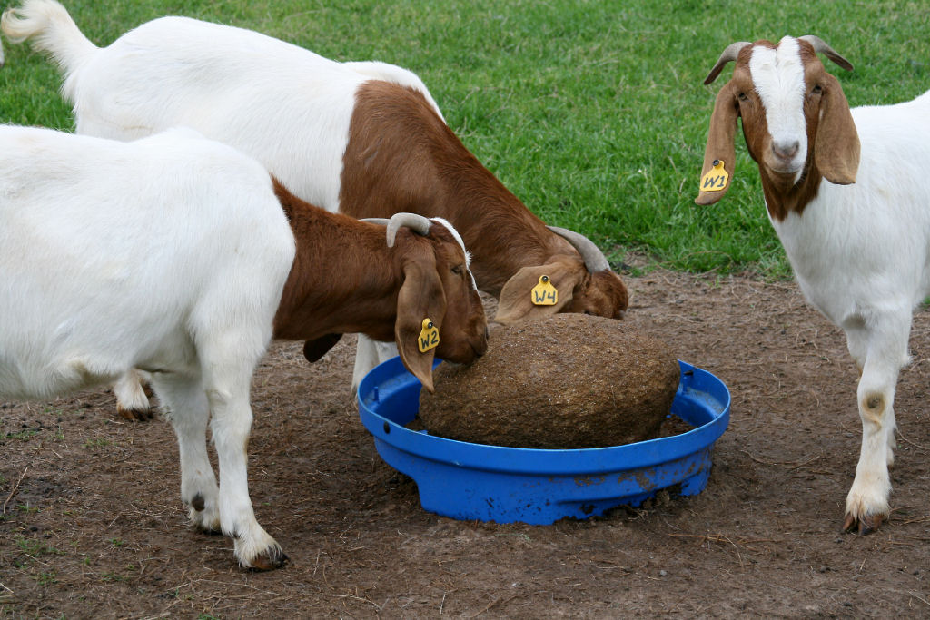 SweetPro® for Goats