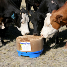 Beef Cattle Products