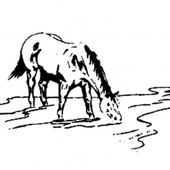 Horse Creek Sale Company